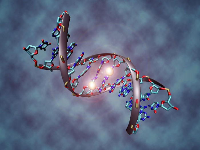 800px-DNA_methylation[1]