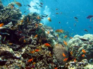 The Death of the Great Barrier Reef?